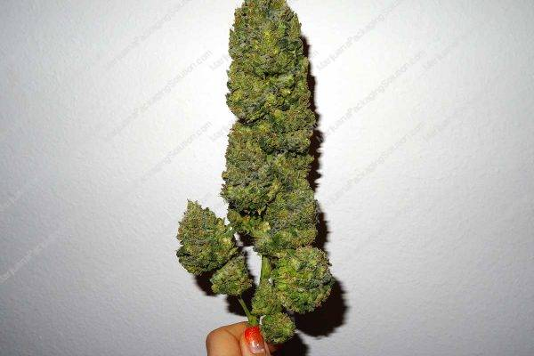 cannabis bud tube packaging
